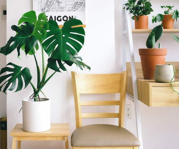 Top 8 Indoor Plants You Can Grow This Winter Season