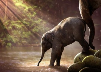 image of mother elephant nudging her baby to cross a river