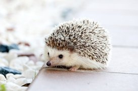 image of small hedgehog, an email sign up form will help you start your artist mailing list which will be small in the beginning and that's okay.