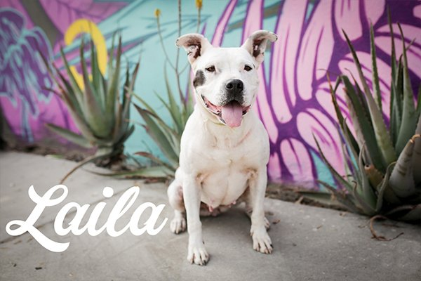 Down town dog rescue dog Laila