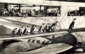 Berthold Lubetkin's Penguin Pool (built 1934)