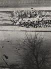 László Moholy-Nagy The Street 1929