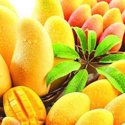 King of Fruits, Mango