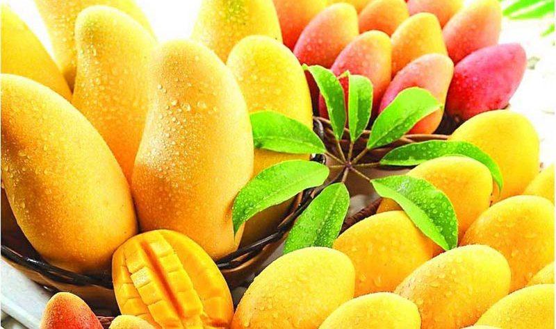 King of Fruits, Mango