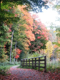 Fall colours were at their peak!