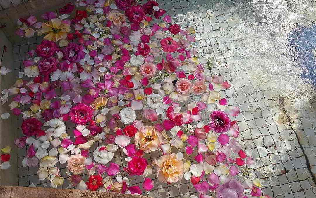 Flower petals floating in a pool. Marrakesh. 2017