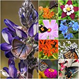 Package of 30,000 Seeds, Bird and Butterfly Wildflower Mixture (100% Pure Live Seed) Non-GMO Seeds by Seed Needs …