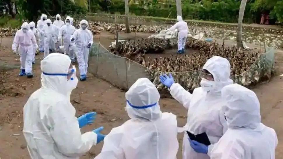 Nothing to panic: Human-to-human bird flu transmission rare, clarifies AIIMS chief Dr Guleria