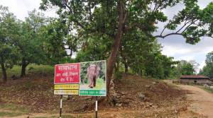 Chhattisgarh to set aside paddy for wild elephants to stop them entering villages
