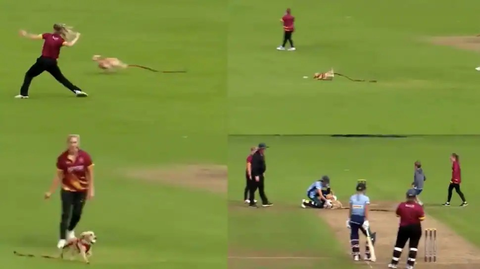 Dog invades pitch during T20 match in Ireland, runs around with ball - watch viral video