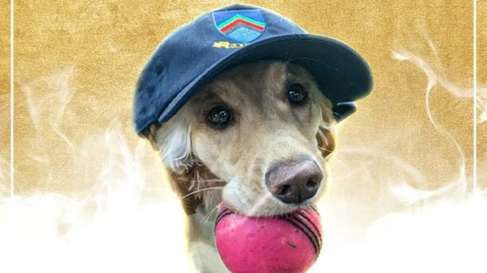 ICC gives Player of the Month award to a DOG for its 'exceptional athleticism' – WATCH