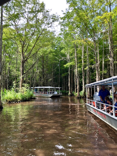 Swamps tours in New Orleans. You see lots of wildlife including alligators, wild boar and several species of birds.