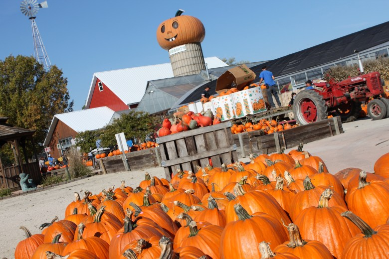Goebbert's pumpkin patch is a great place to take the family this fall in the Chicagoland area. Add it to your Chicago Bucket List!
