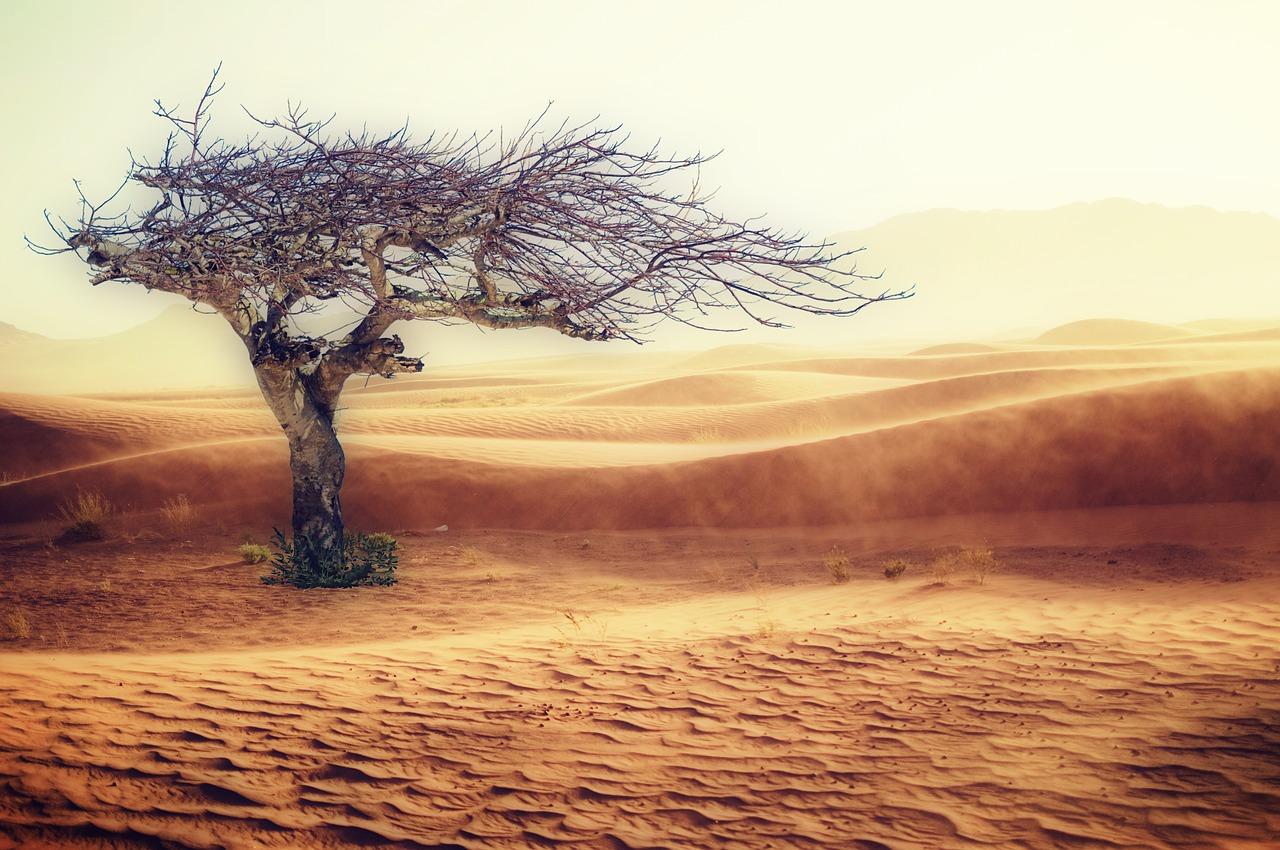 desert-2227962_1280