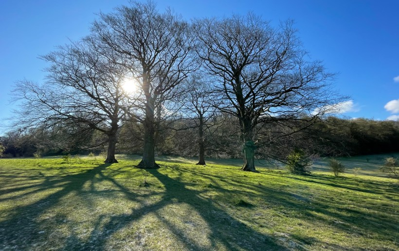 Spring shadows in Tring park