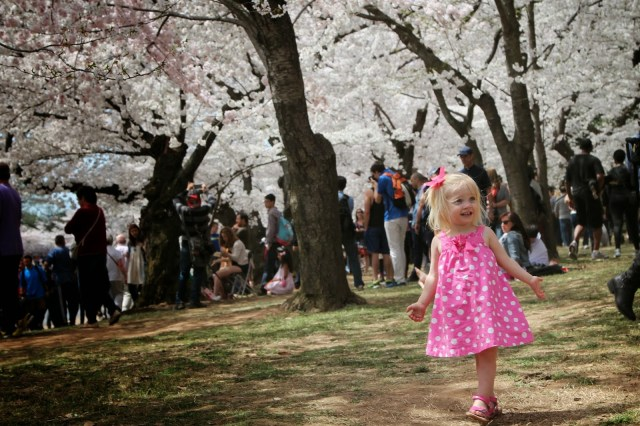 Cherry Blossoms with Kids || The Chirping Moms