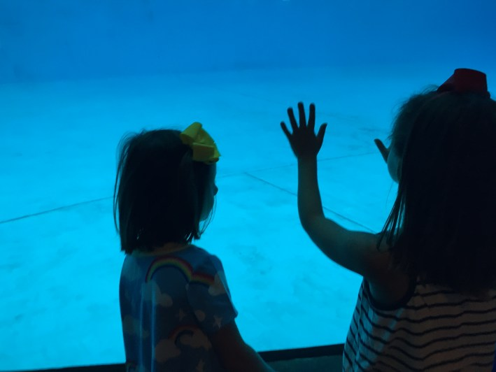 Tips for Visiting the National Aquarium