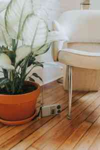 plant and small radio in renovated home