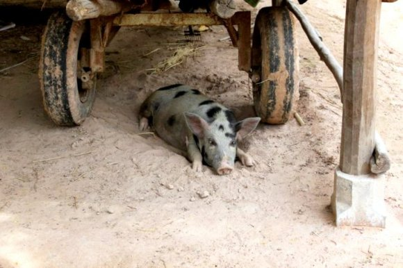 And a pig. Who scared me.