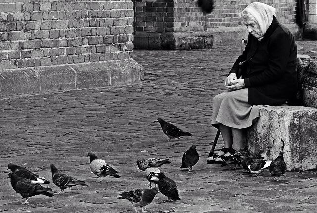 christopher troy pigeons
