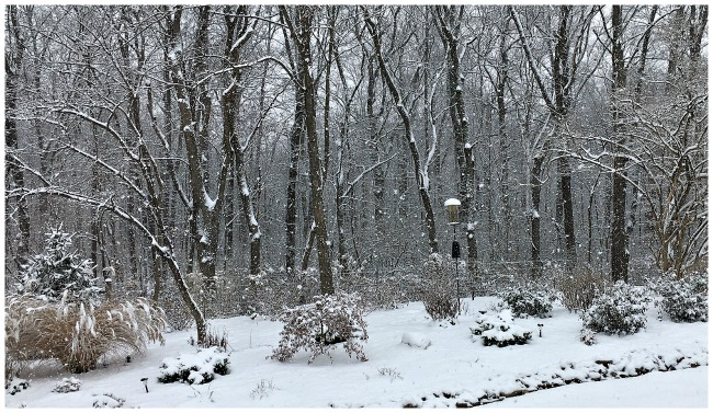 Picture of snow in Cincinnati