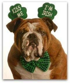 Bulldog dressed for St Patricks Day