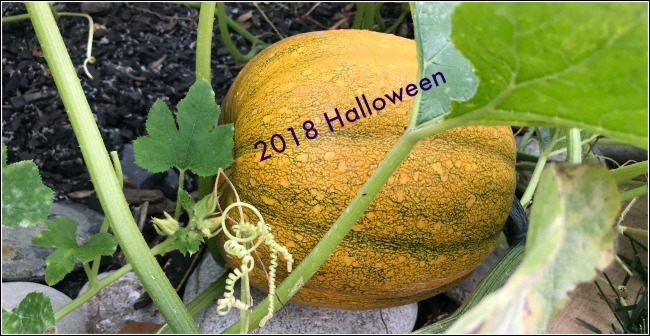 Pumpkin Patches and Haunted Houses in Cincinnati