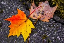 Autumn palet 2