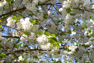 alightcirclewebsitespringblossoms1mpbaecker
