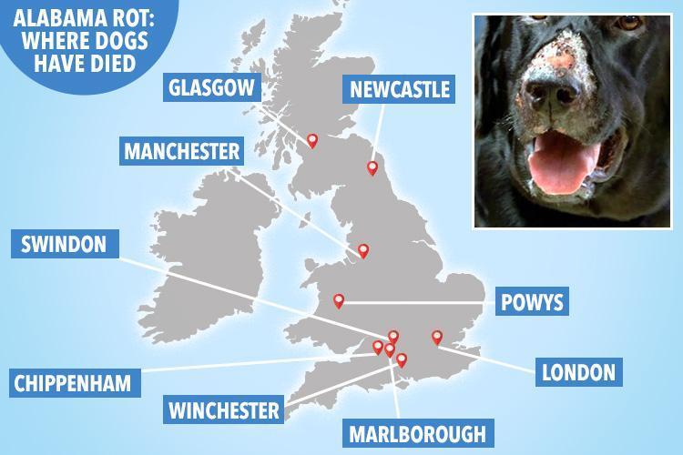 jh-map-dog-rot-new-v2