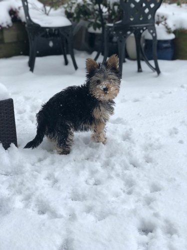 Meet Aurora, she's from Rathfarnham and is six months old. She really enjoyed last week's #BeastfromtheEast
