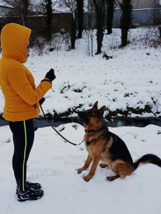 This is Lucca, he is a pure bred German Shepard. He loves snow, mountain walks and his owner Dayna. Photo Credit: Dayna Clegg.