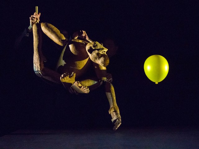 Photo of a chimpanzee puppet looking at a yellow balloon. The stage background is very dark, so the puppeteers are invisible except for a hand at each elbow joint and another at the neck of the puppet. The puppet looks like it's made of wood, but has realistic proportions.
