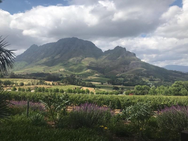 Op wijnreis door Zuid-Afrika