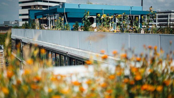 In Rotterdam borrelen en chillen te midden van een groene oase