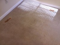 Carpet Tips | CitruSolution Carpet Cleaning of West Cobb