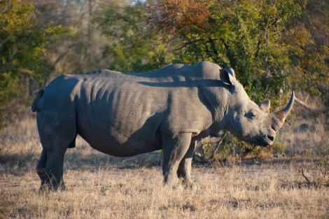 Photo of a Rhino by Jay Aremac