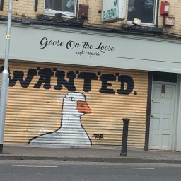 Art on the shutter of Goose On The Loose cafe on Kevin Street, image by Hannah Lemass