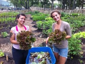 Image:  http://thegreenhorns.wordpress.com/2011/07/24/battery-conservancy-volunteer-position-urban-farm-intern/