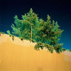 Gowanus_Wild_Fluorescent_Tree_1000