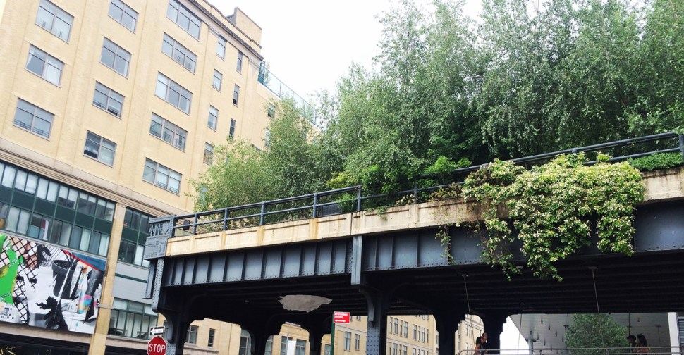 Plantings on the High Line have become an idealized version of its wild self.
