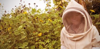 Caring for the bees in Cauca.