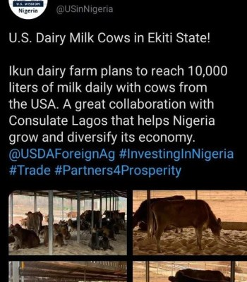 Herders , Good News To Fulani Herders, US Mission Plans Big For Nigeria Cow Milk Production
