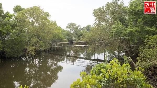 Mangrove Forest at Lobo Batangas