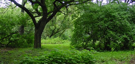 Wooded Island at Paul Douglas Nature Sanctuary/picture from City of Chicago