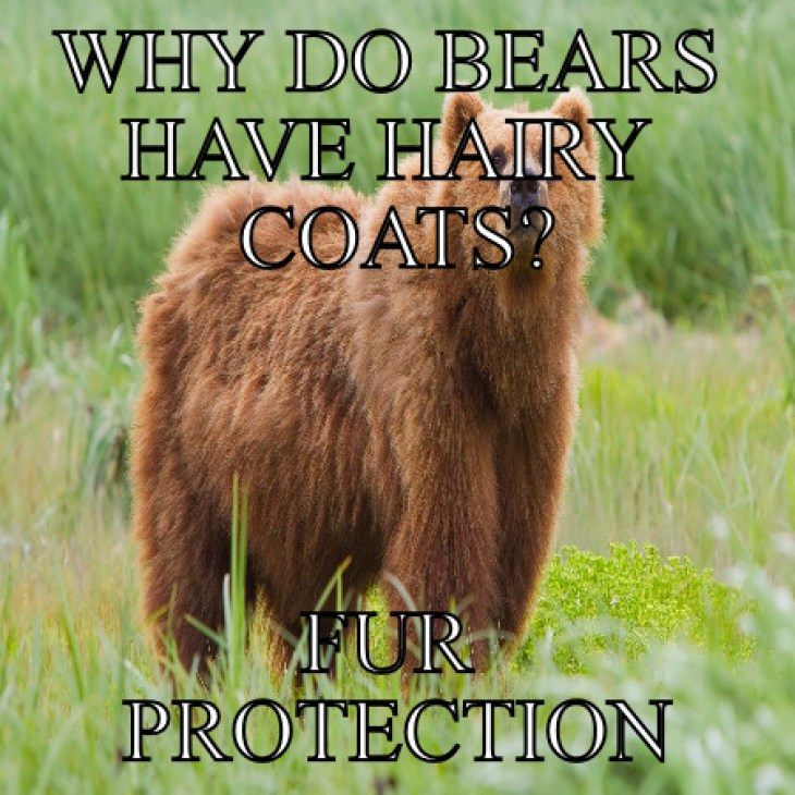 Fur Protection