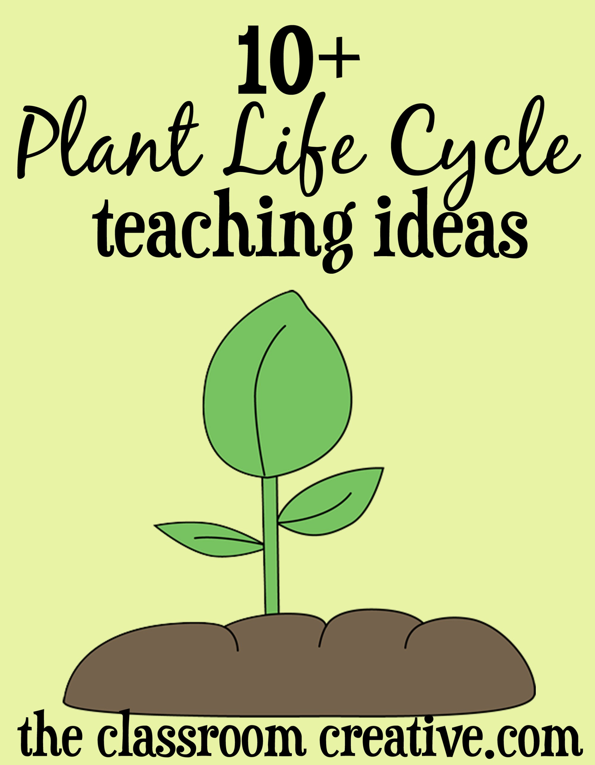 hight resolution of Plant Life Cycle Unit Ideas and Activities