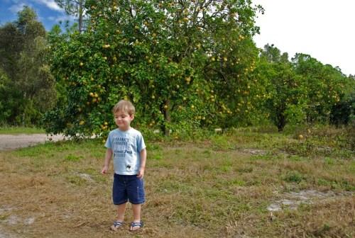 Ethan_grapefruit