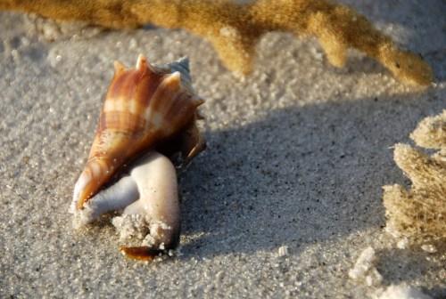 Living_shell-1