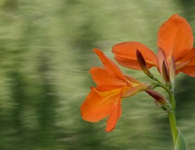 1163, orange flower
